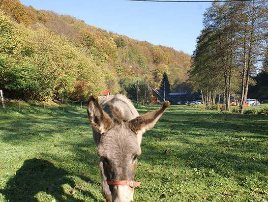 The donkey, Bedkowska Valley
