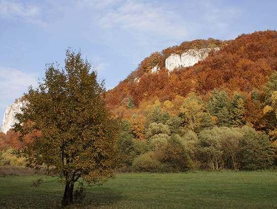 Dolina Będkowska in autumn