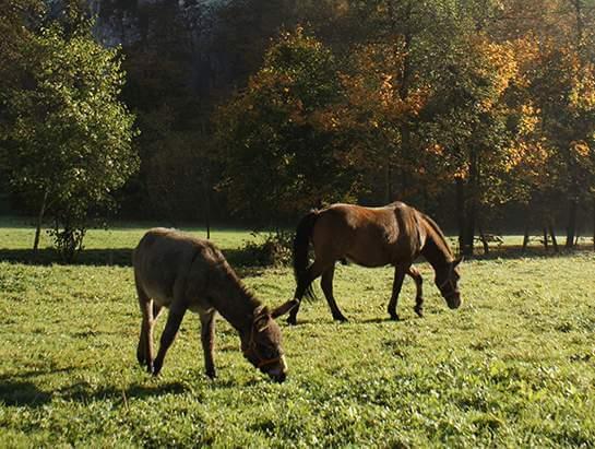 Osioł i koń na pastwisku. Weekendowy spacer, okolica Krakowa.
