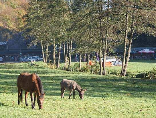 Piorun i Victor, camping Bedkowska Valley